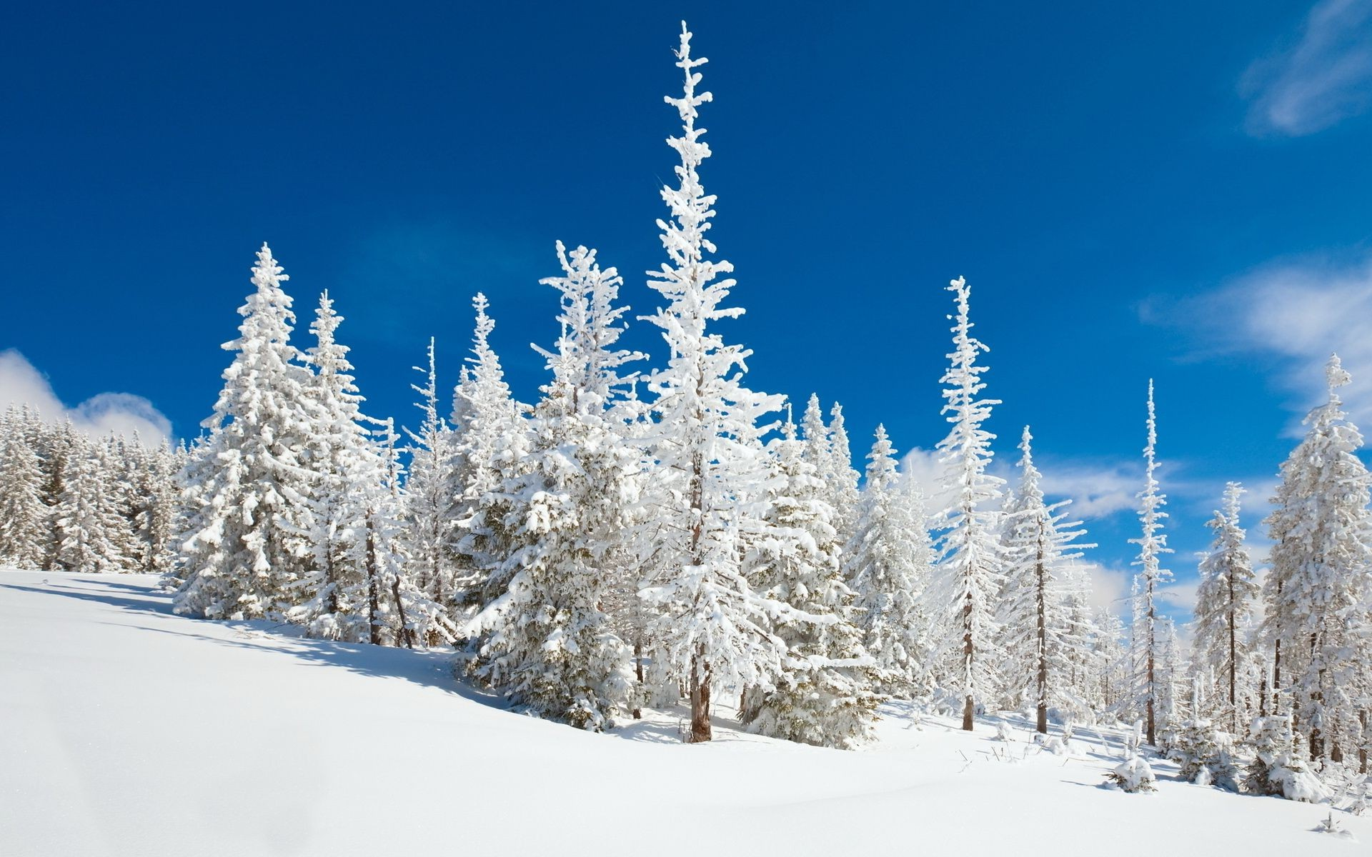 winter snow cold frost wood frozen season tree ice mountain snowy weather landscape fir scenic evergreen powder fair weather spruce nature