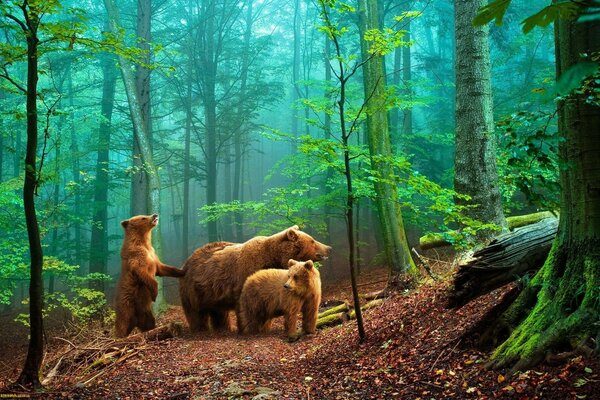 nature bears in the woods