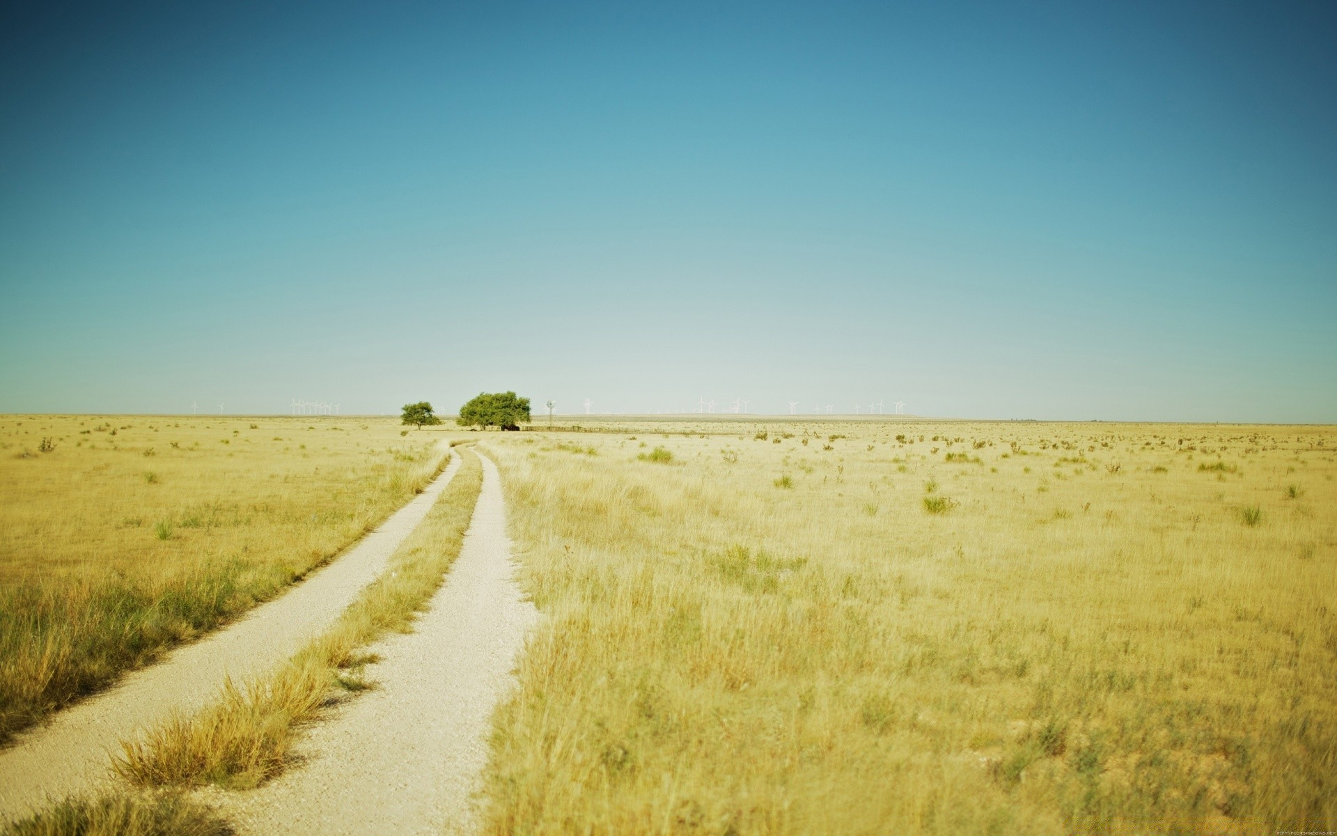 Beautiful Summer Landscape With A Field Path Desktop Wallpapers For