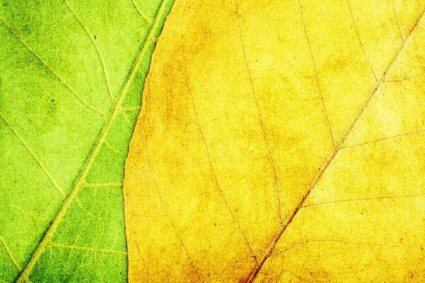 Green And Yellow Leaves Texture
