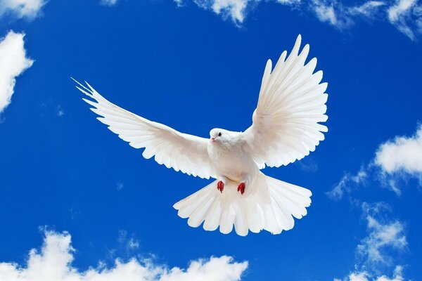 Peace to the world. Pigeon on blue sky