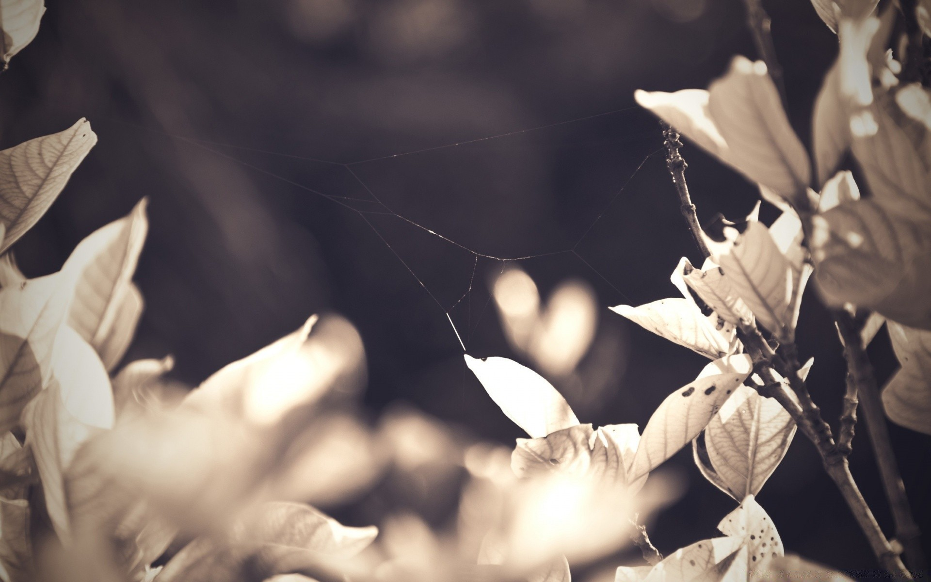 vintage nature monochrome leaf outdoors flower one blur