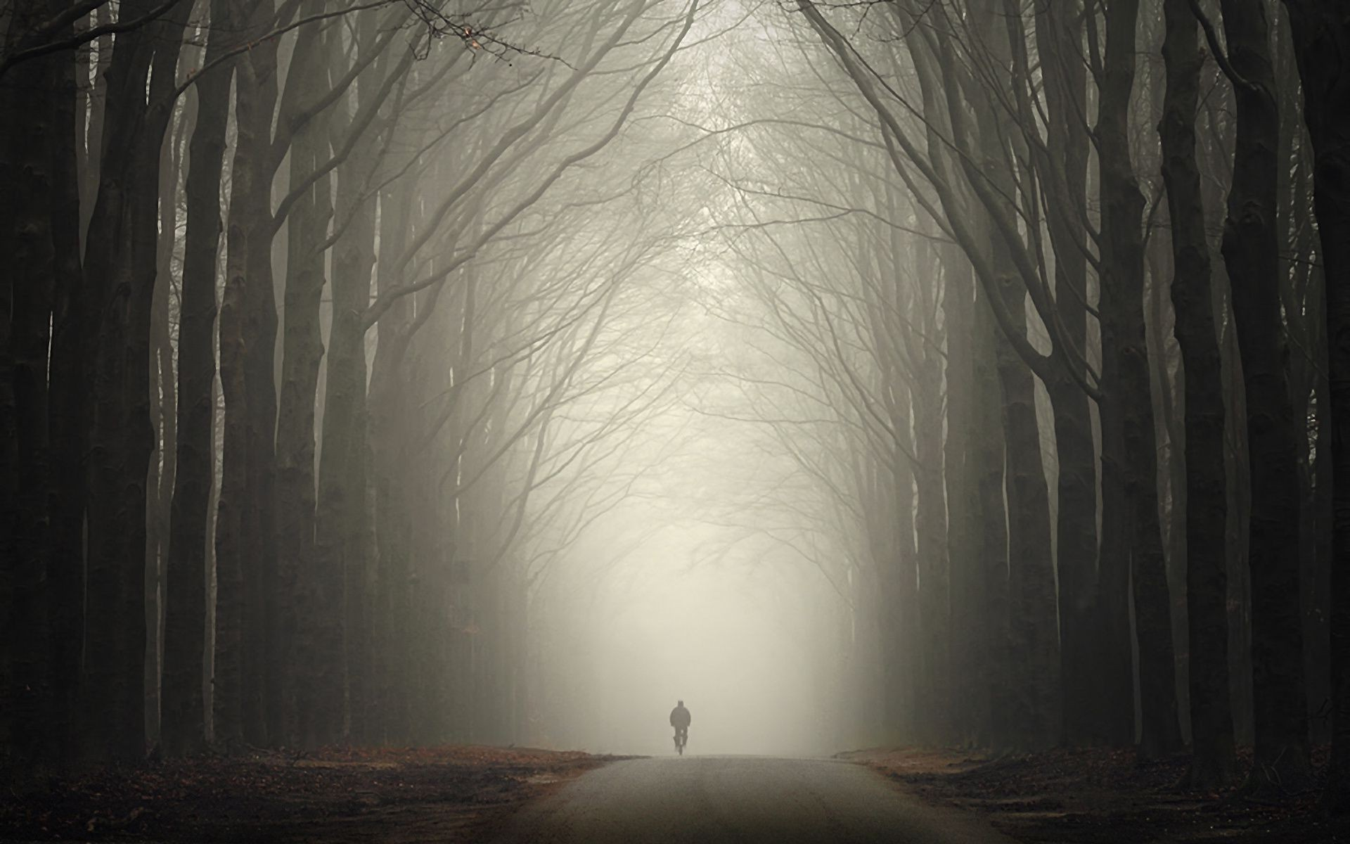Man Autumn Forest Road Fog Android Wallpapers For Free