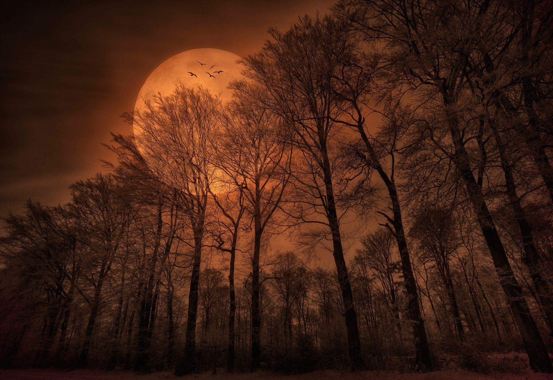 Moon Birds Nature Night Forest Iphone Wallpapers For Free