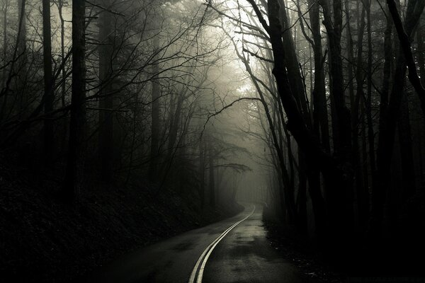 Dark Road Forest