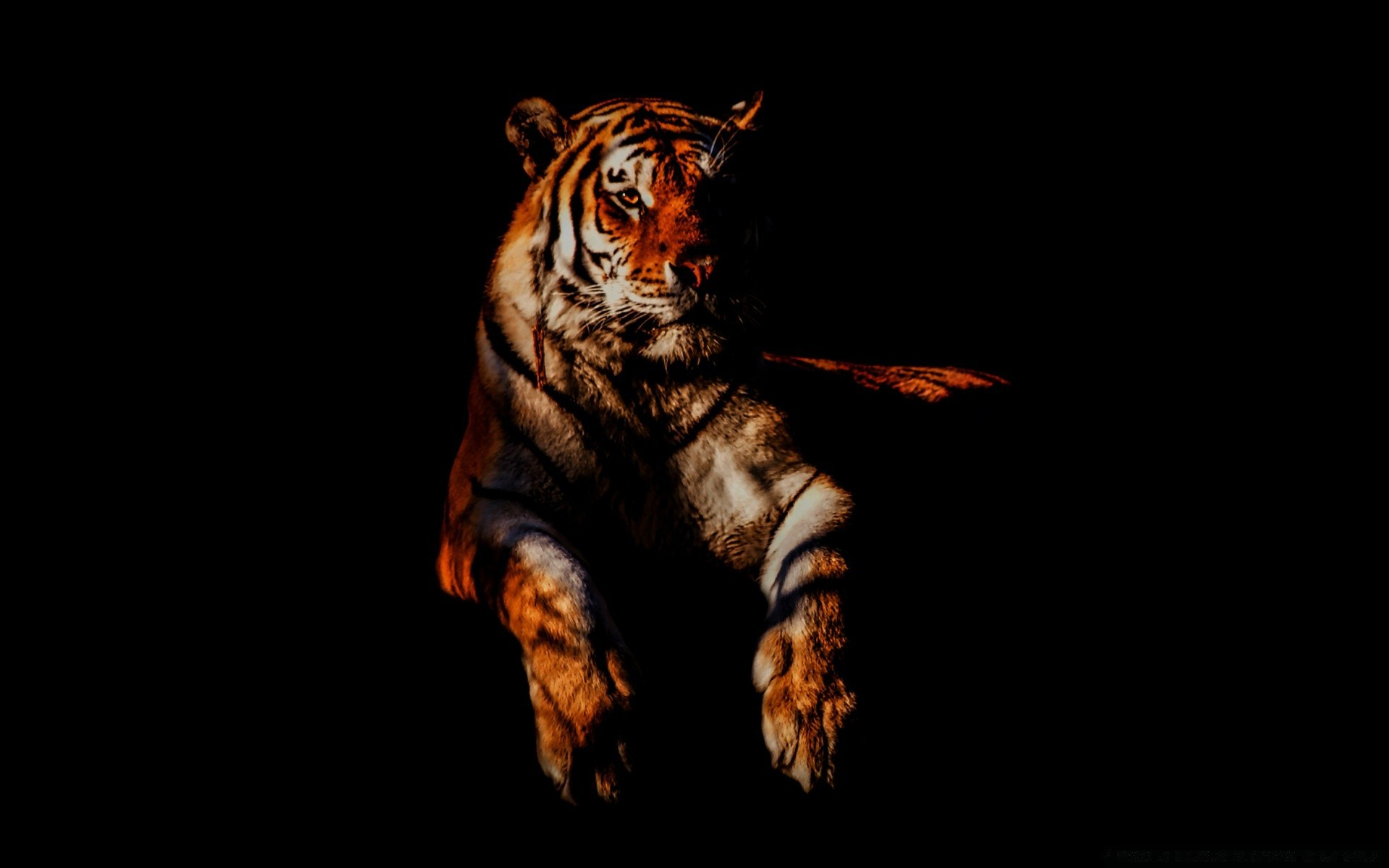 Tiger IPhone Wallpapers For Free
