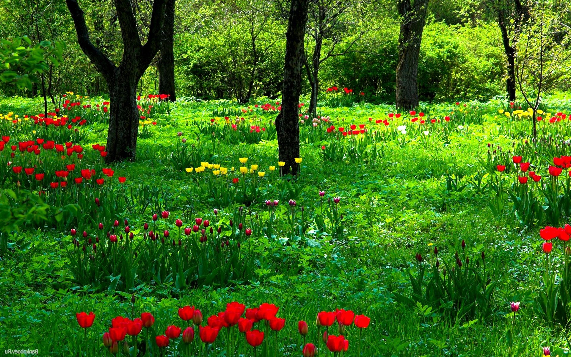 forest flower nature garden grass flora summer leaf hayfield growth field poppy rural blooming landscape floral season park outdoors color
