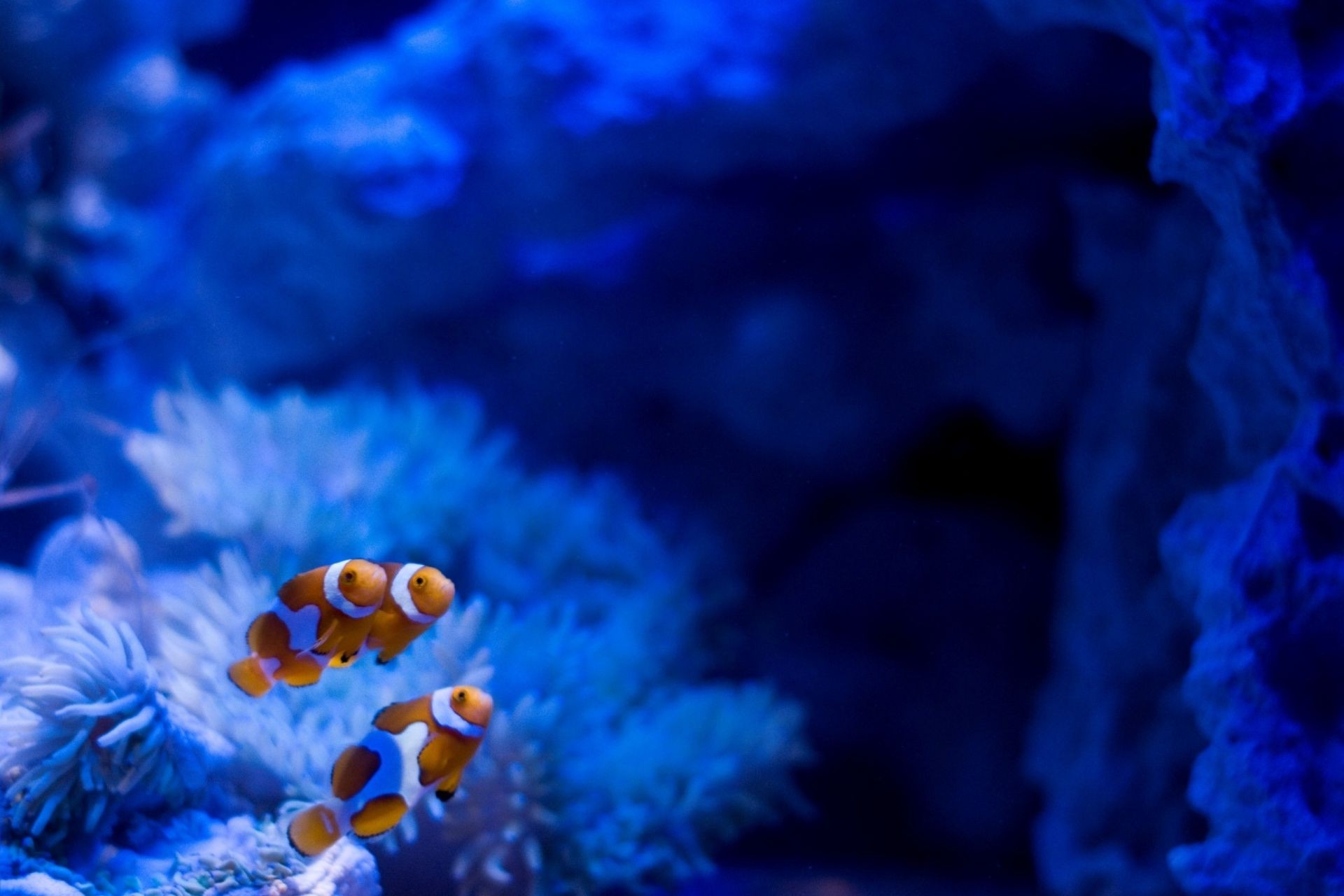 stones clown fish algae Aquarium