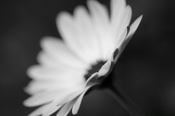 Flower Monochrome
