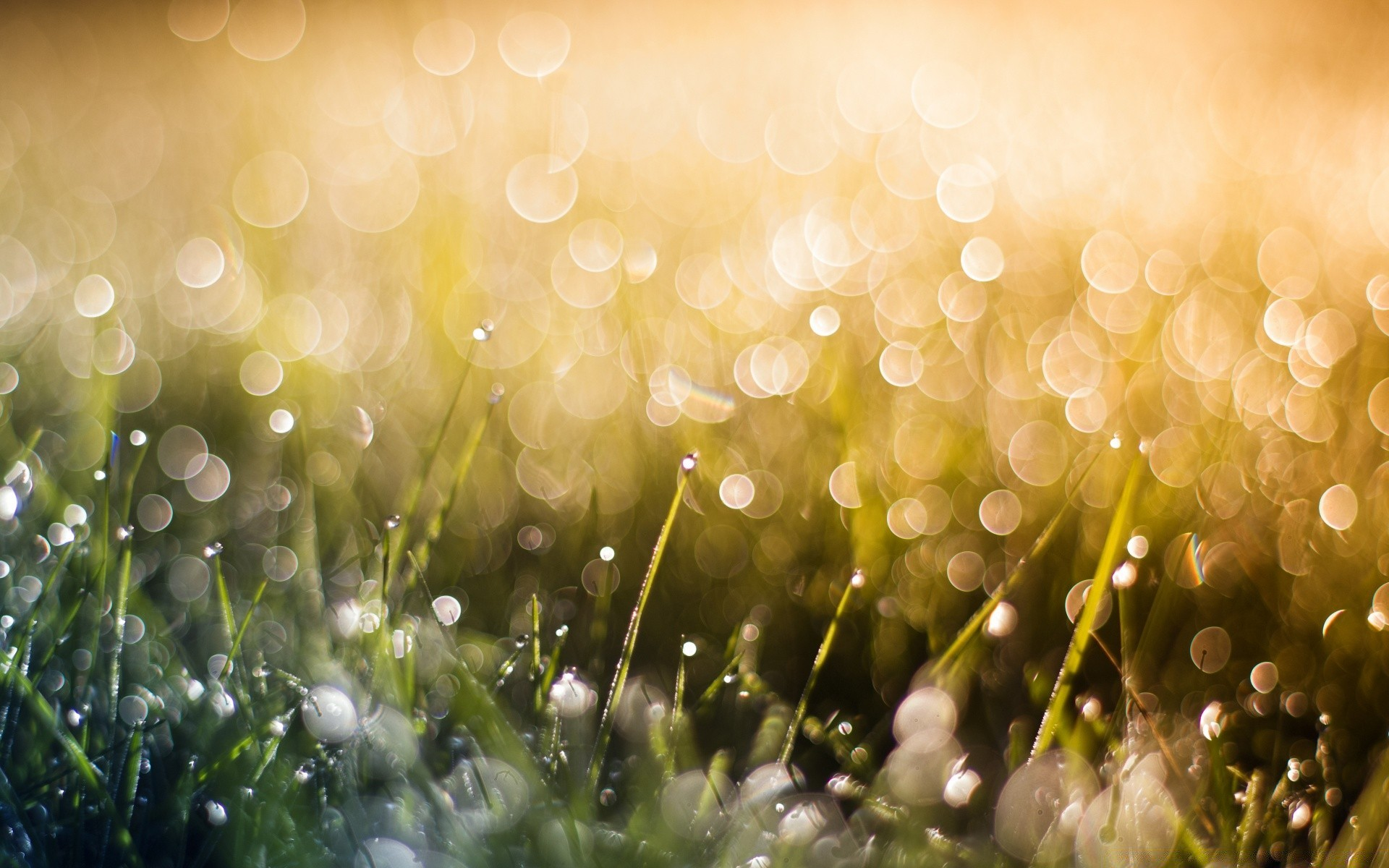Bokeh Color Nature Desktop Bright Grass Blur Summer Luminescence Sun Season Flora Garden Christmas Shining Magic