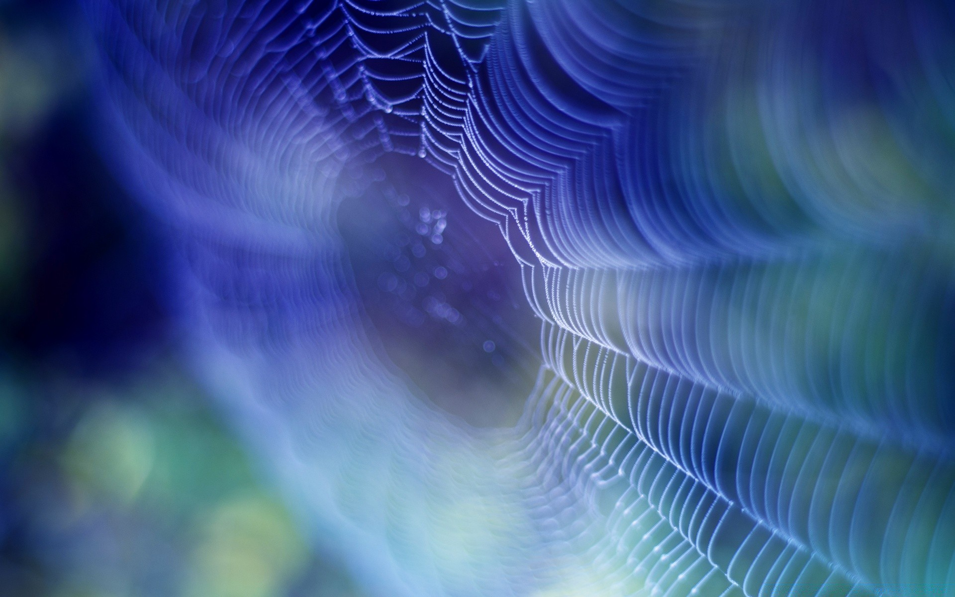 Spiderweb Background IPhone Wallpapers For Free