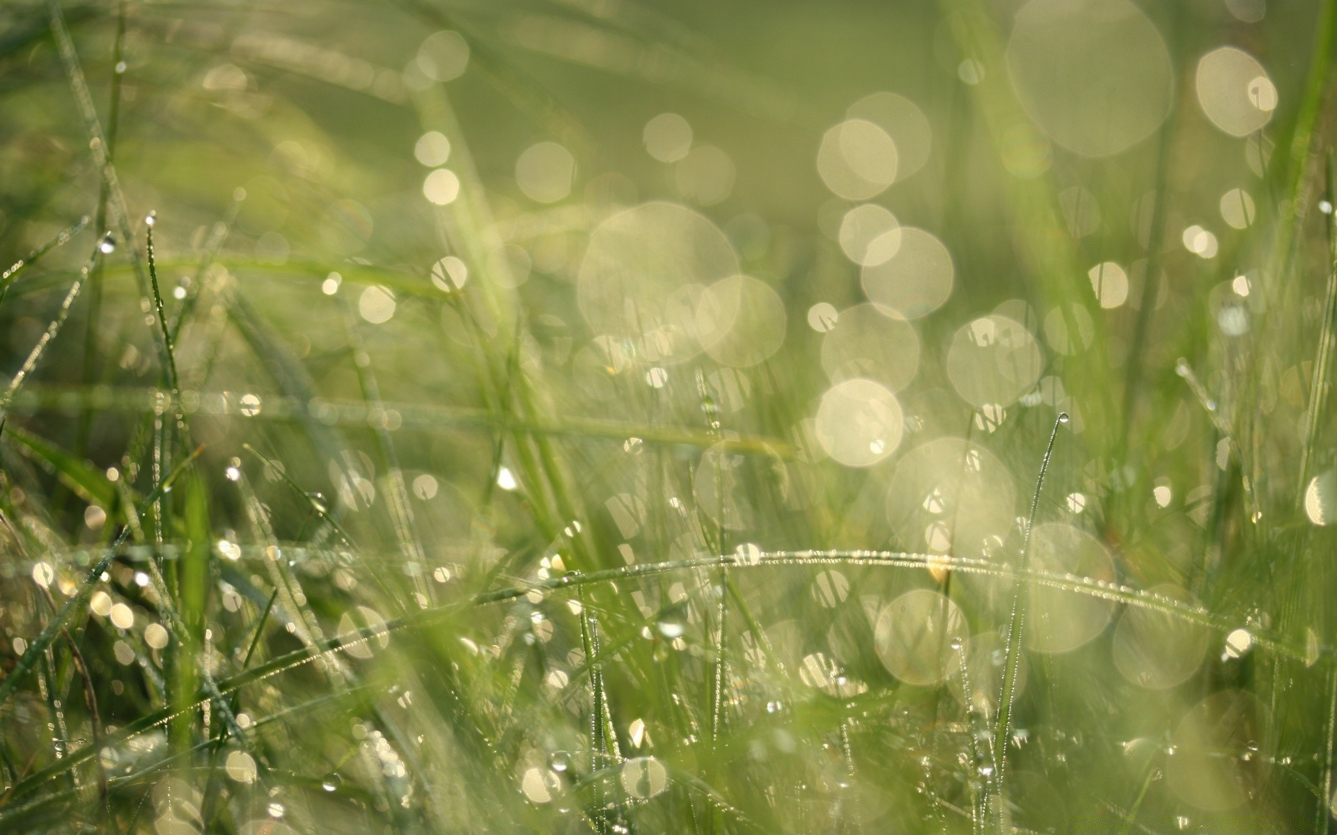 grass morning dew bokeh. android wallpapers for free.