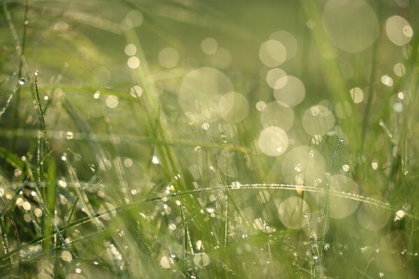 Grass Morning Dew Bokeh