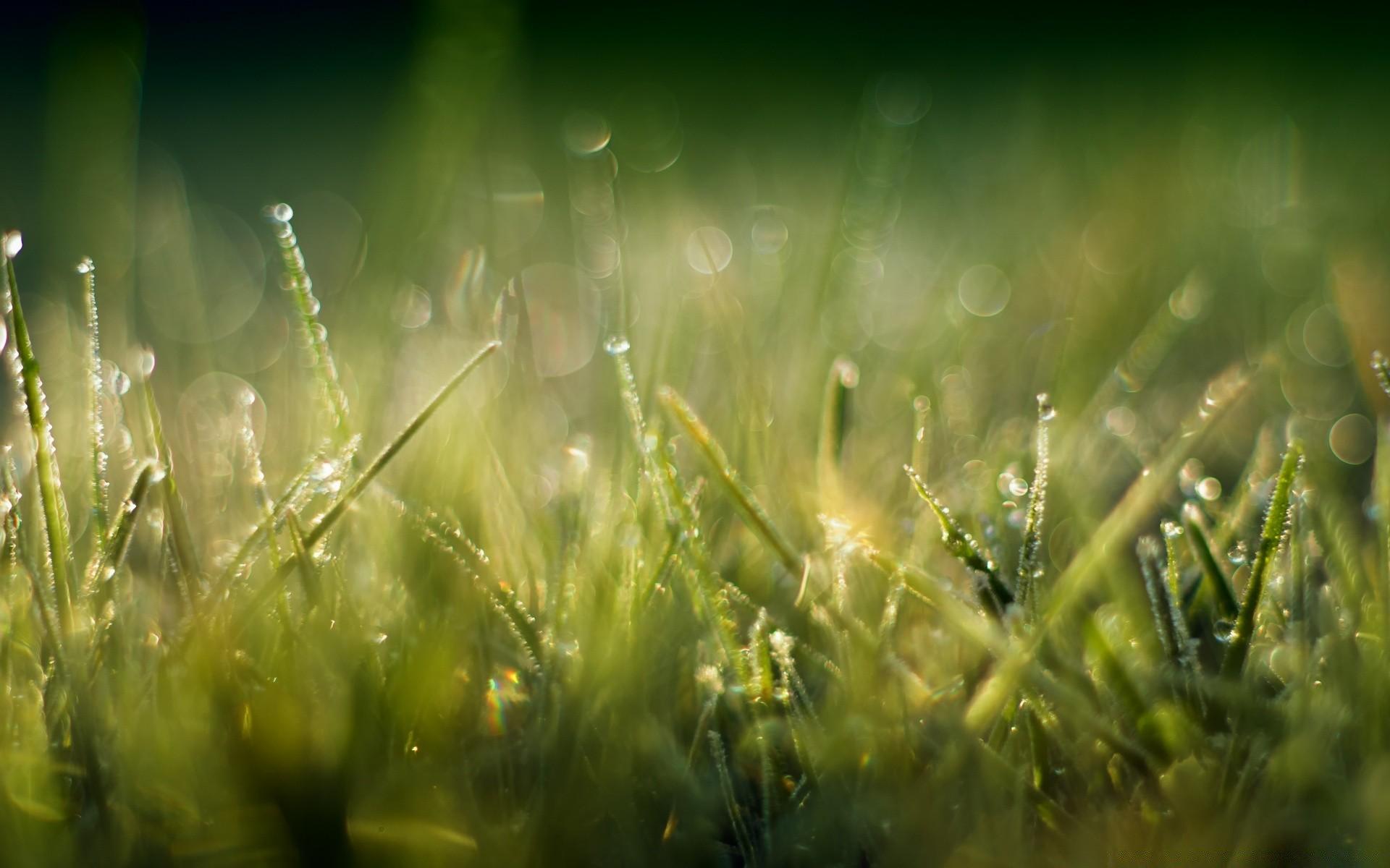 Трава макро съемка  № 3147965 бесплатно