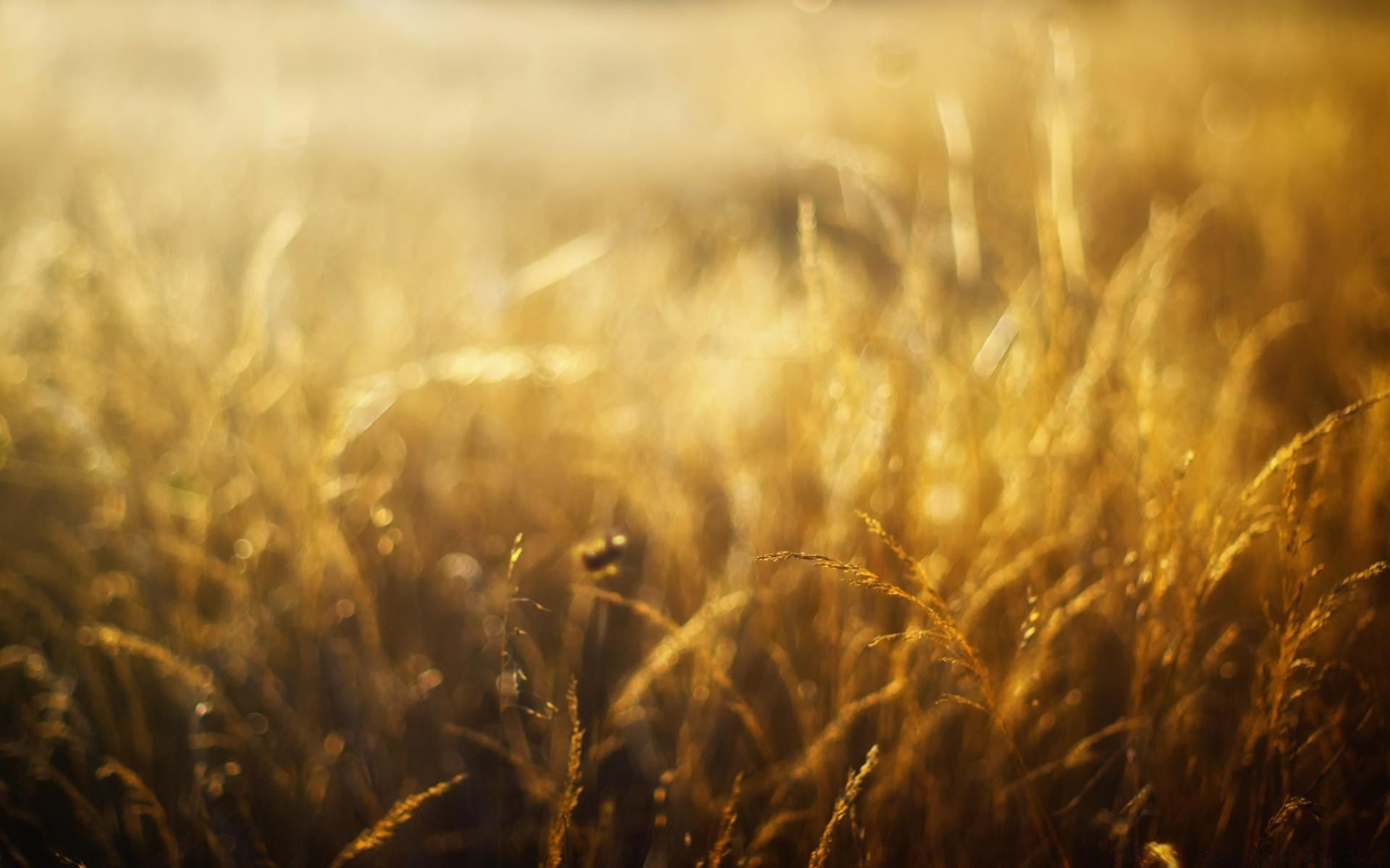 стрекозы рожь солнце золотистая без смс