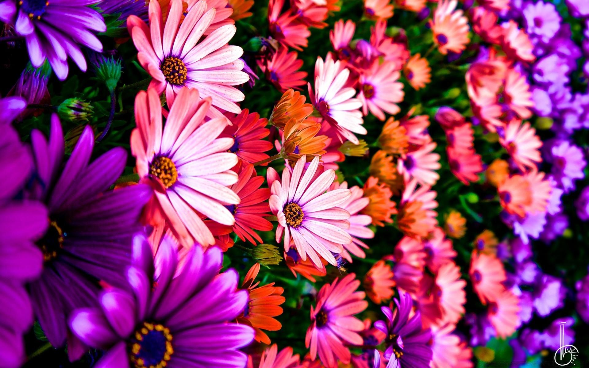Фото цветов для рабочего стола на весь экран в хорошем качестве