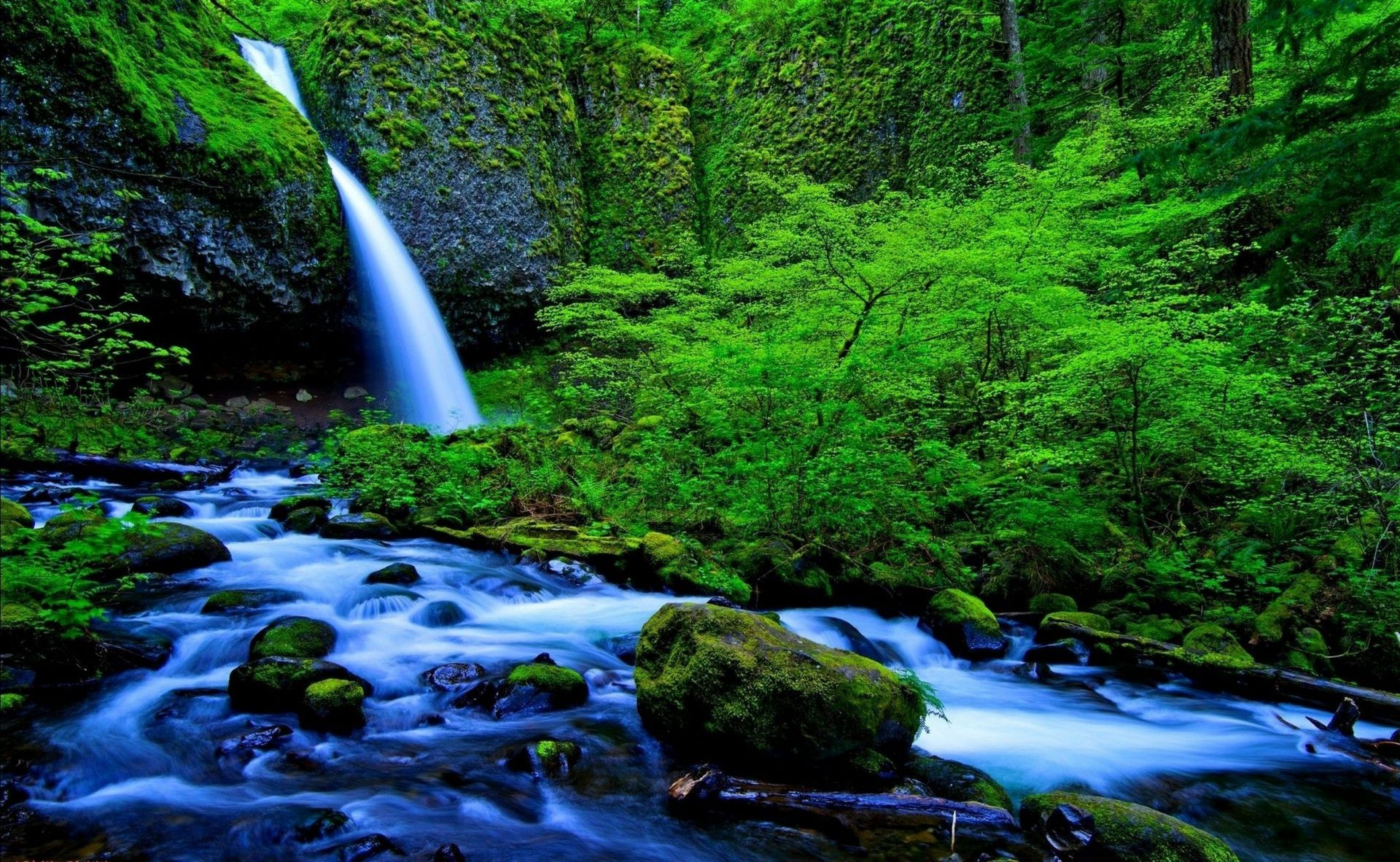 Nature waterfall forest river