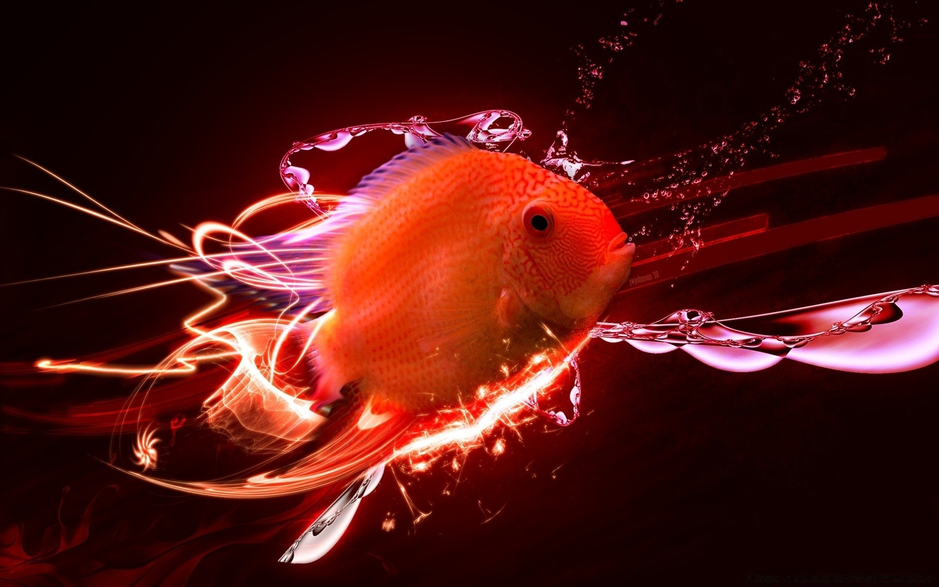 Tropical Fish. Android wallpapers for free.