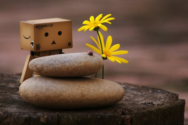 Danbo And Zen Pebbles
