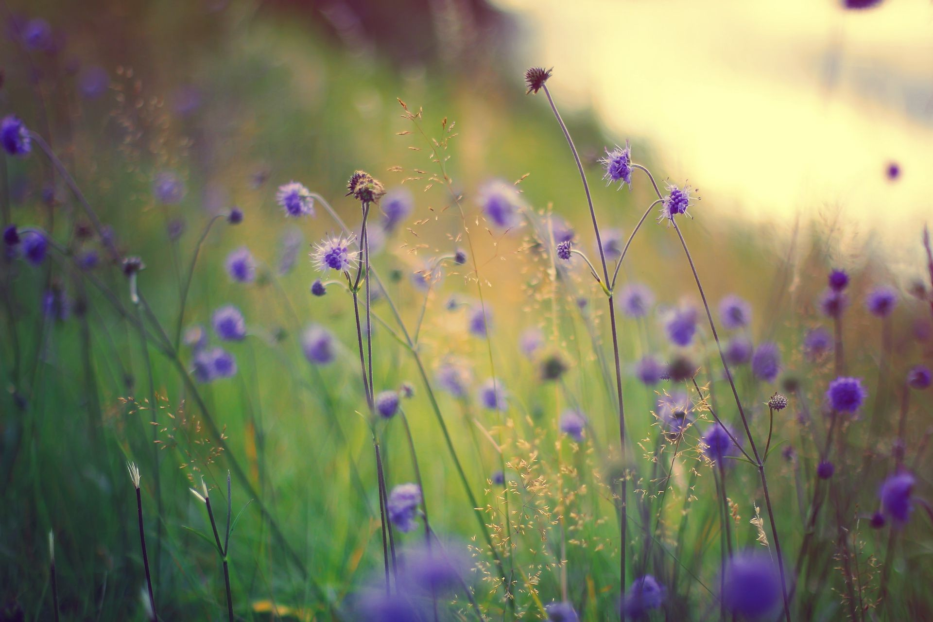 grass macro flowers purple field