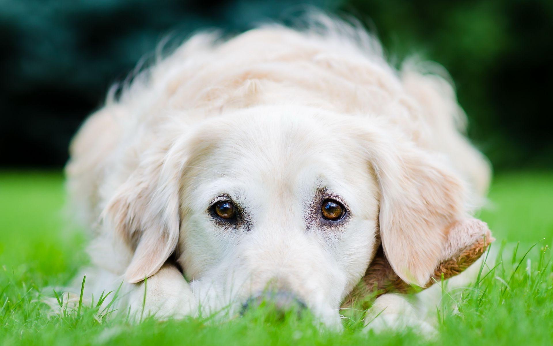 природа белая собака животное улыбка  № 1423922 без смс