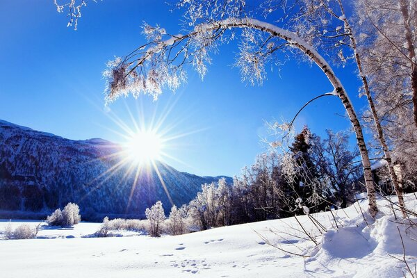 Nature mountains winter sun tree snow