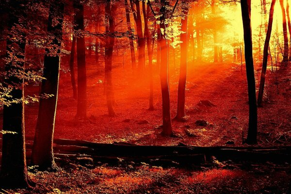 Red Light In The Forest