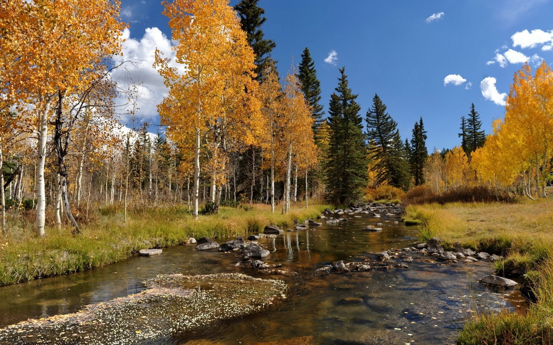 река осень деревья  № 3186452 бесплатно
