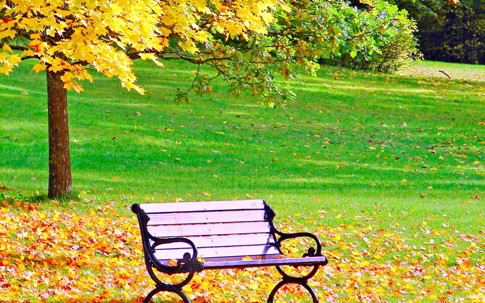 autumn fall bench leaf park nature season garden tree wood grass landscape maple outside color outdoors scene summer lawn flower
