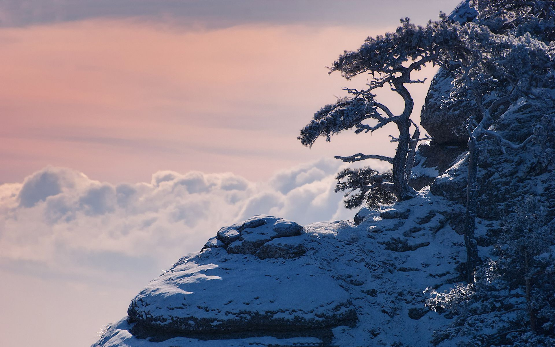 Crimea clouds winter snow mountains pine trees