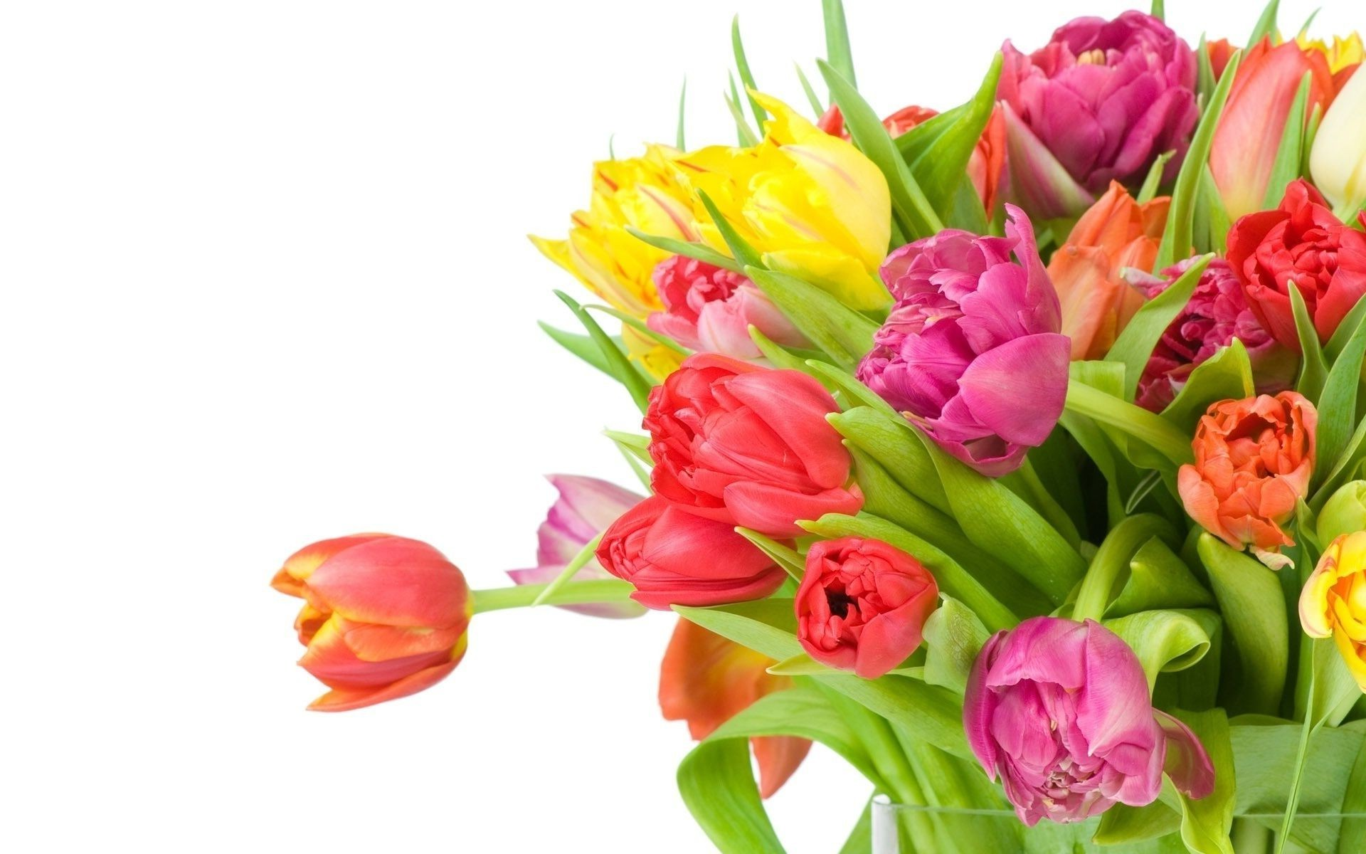 Different white background flowers tulips bouquet android different white background flowers tulips bouquet android wallpapers for free mightylinksfo