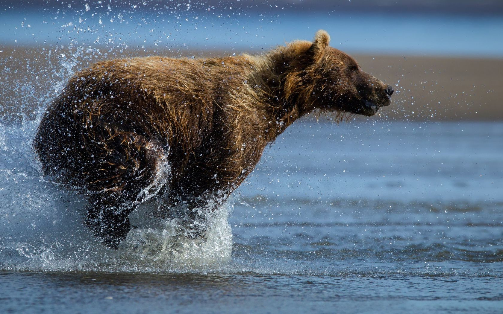 bear spray bear water drops