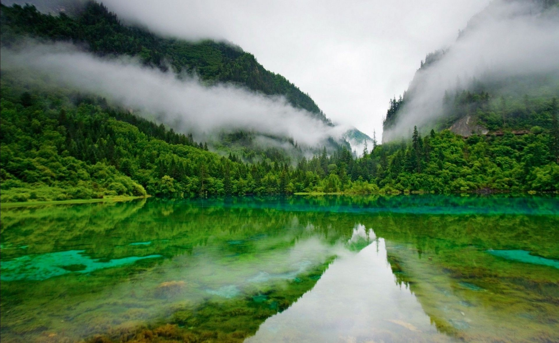 Nature lake mountains fog greens