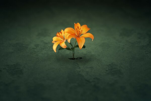 Creative Orange Flowers