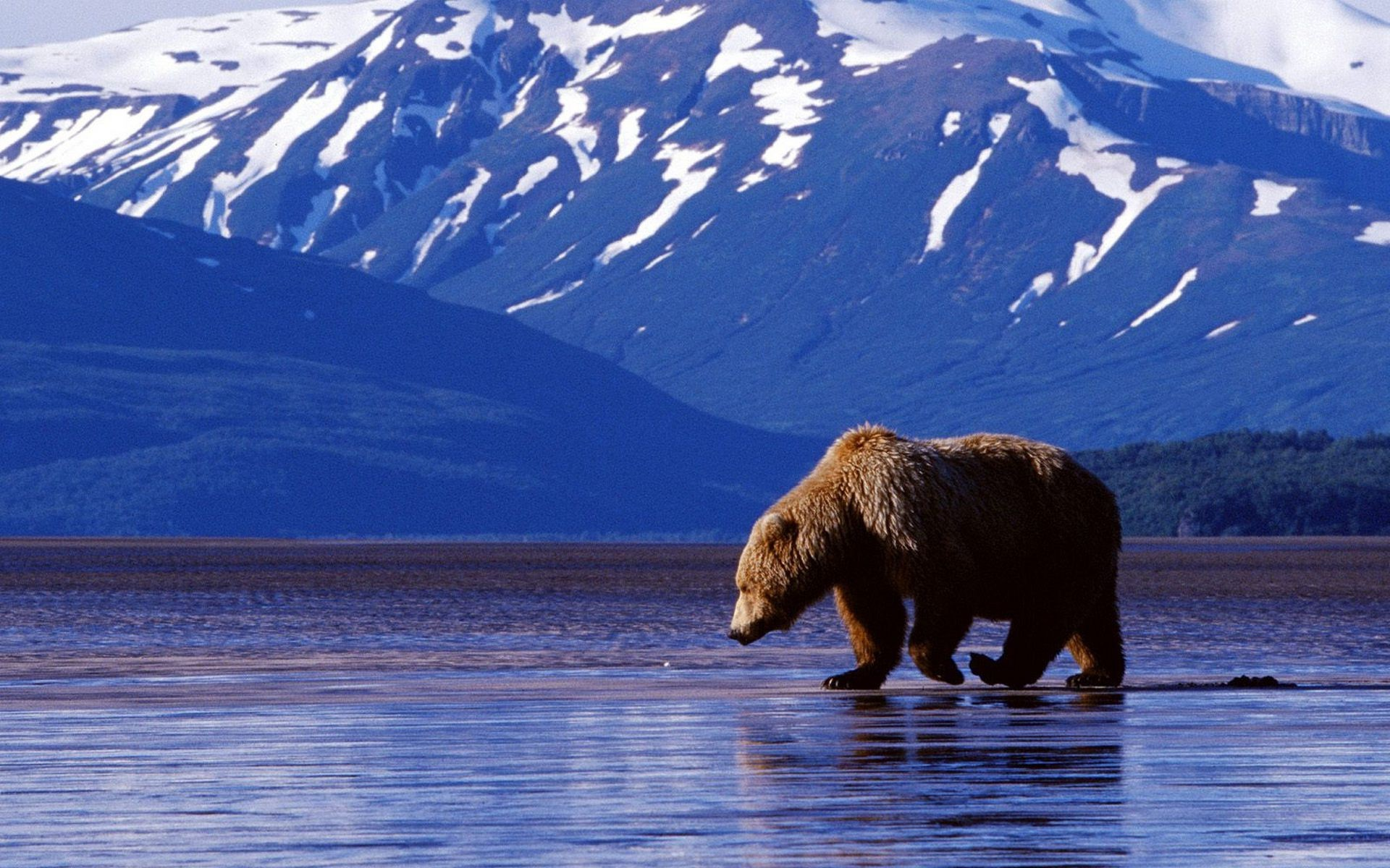 bears snow water outdoors winter lake ice travel mountain frosty nature cold landscape reflection river