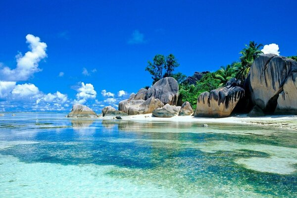 Seychelles tropical sea palm trees