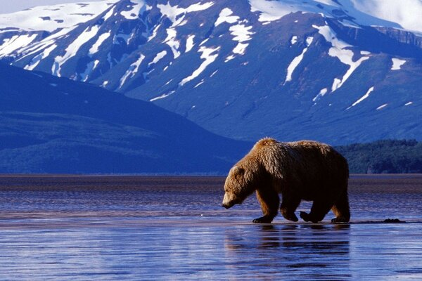 Bear mountains water background