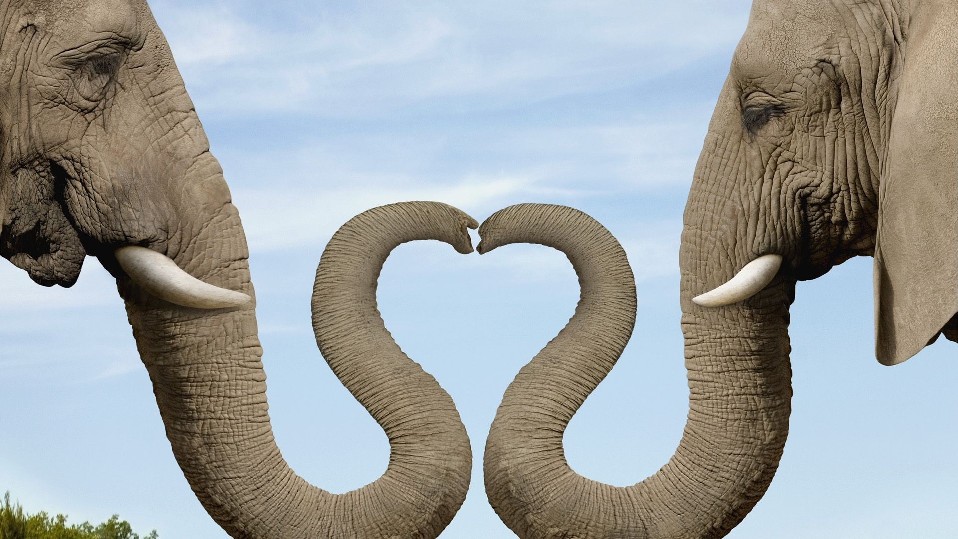 Elephant Elephant Trunk Heart Android Wallpapers For Free