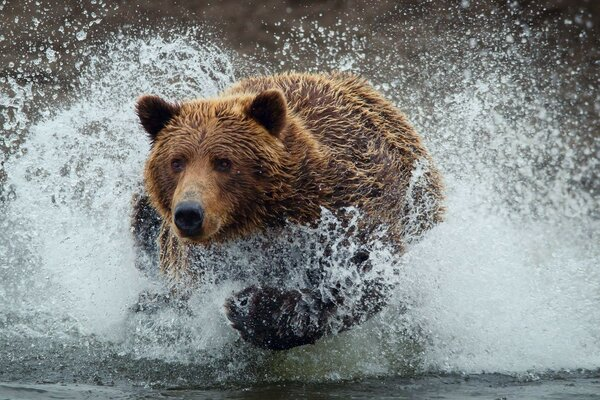 bear spray bear drops wet