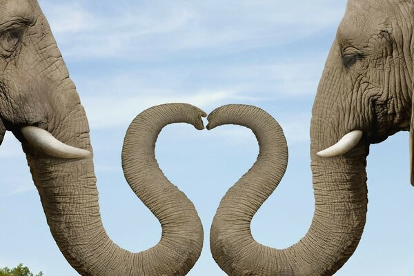 Elephant elephant trunk heart