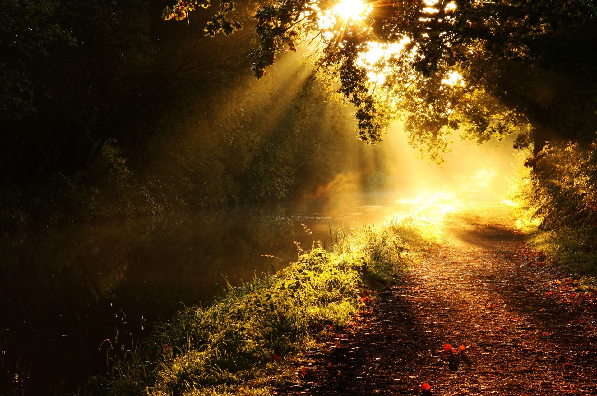 the sunset and sunrise landscape fog dawn sun nature tree outdoors mist sunset light fall
