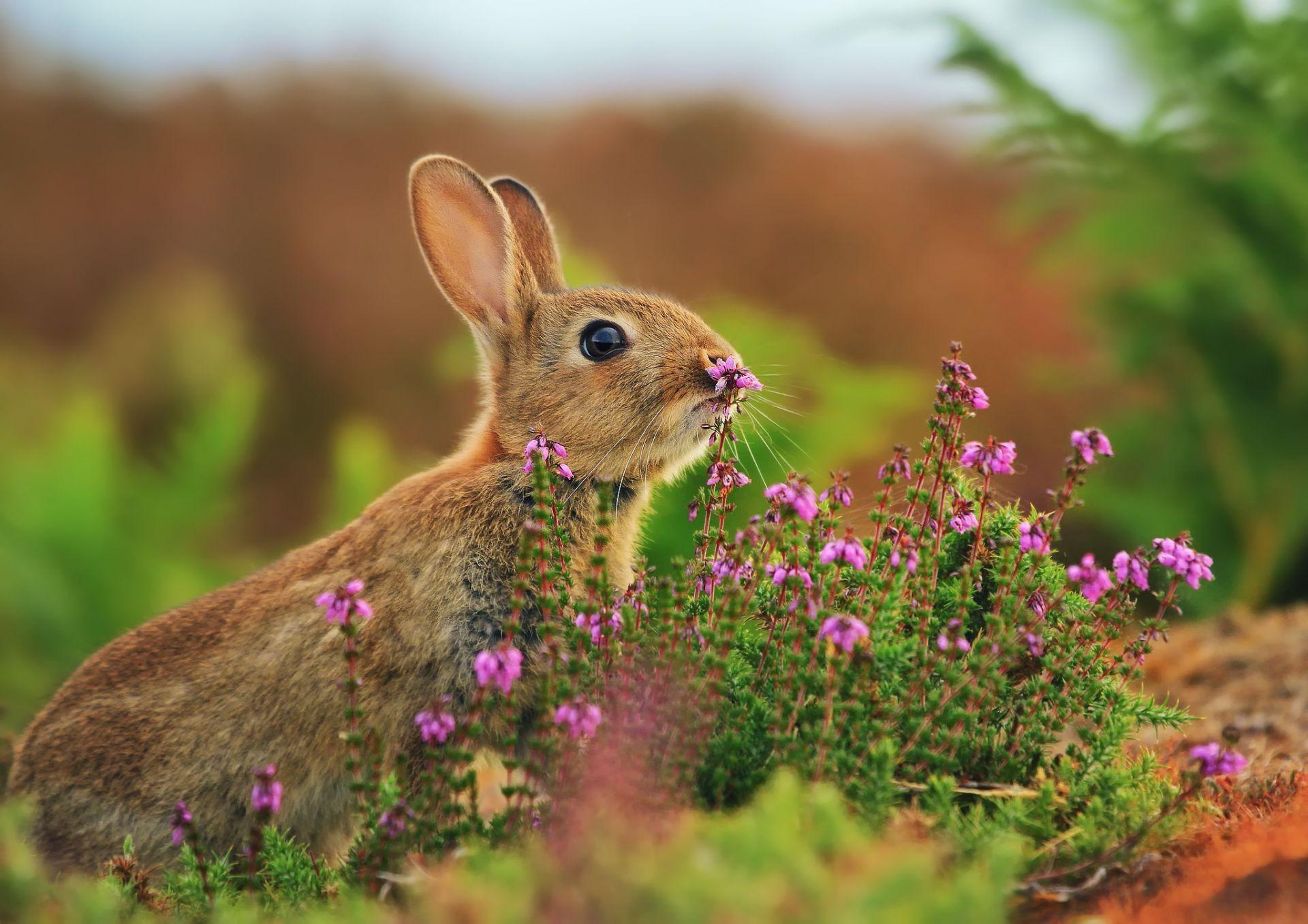 кролик девушка природа животное  № 1594023 без смс