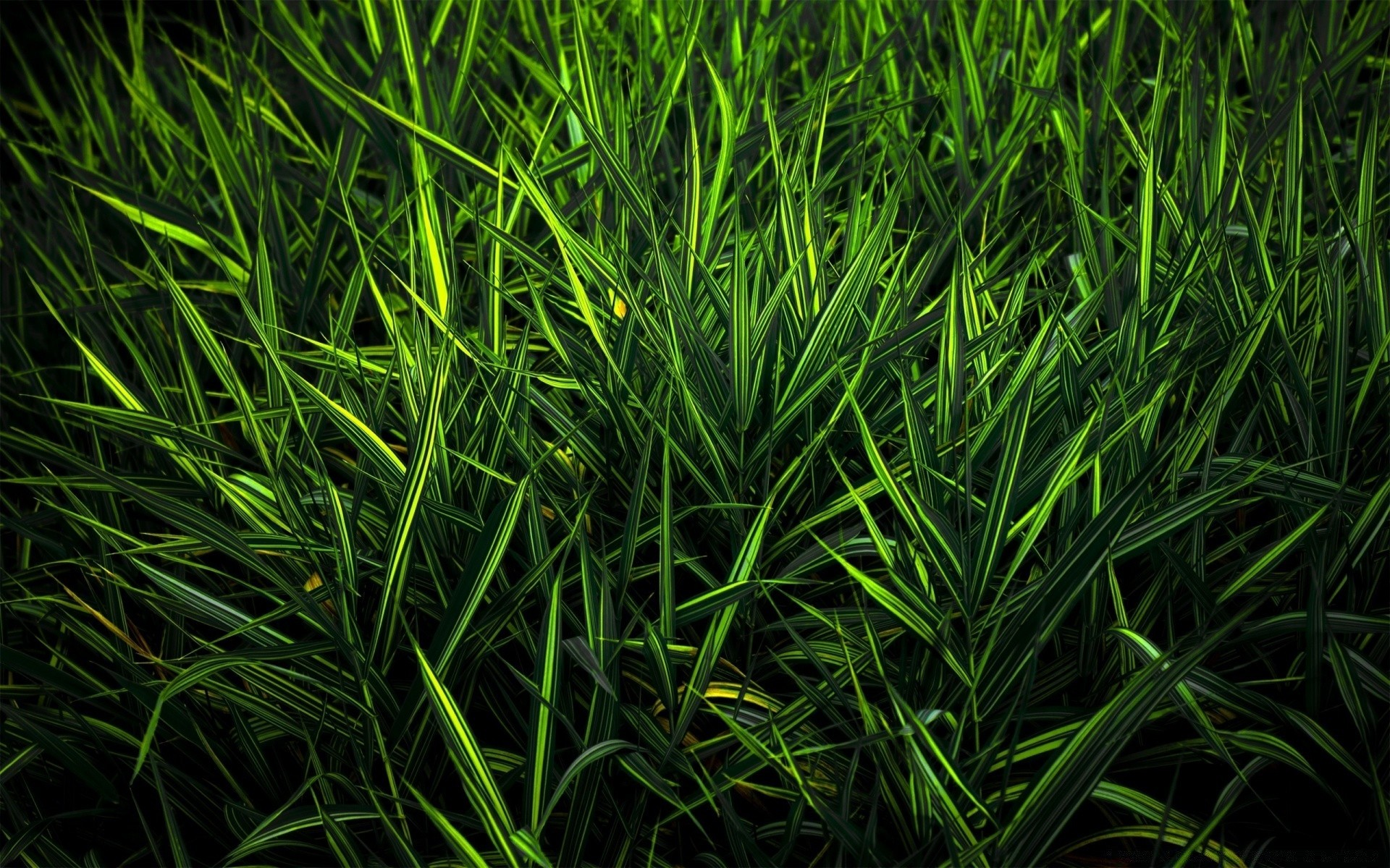 Green Grass Android Wallpapers