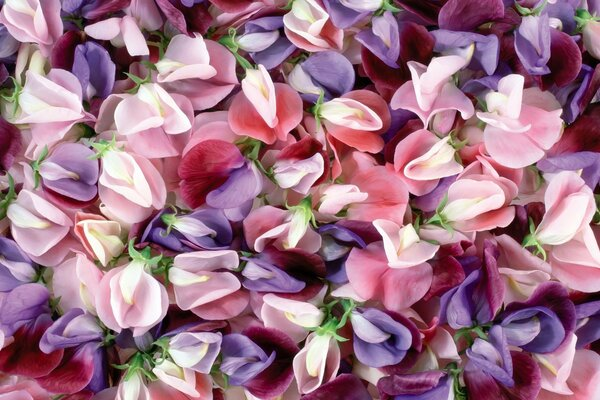 macro texture colors flowers screensaver