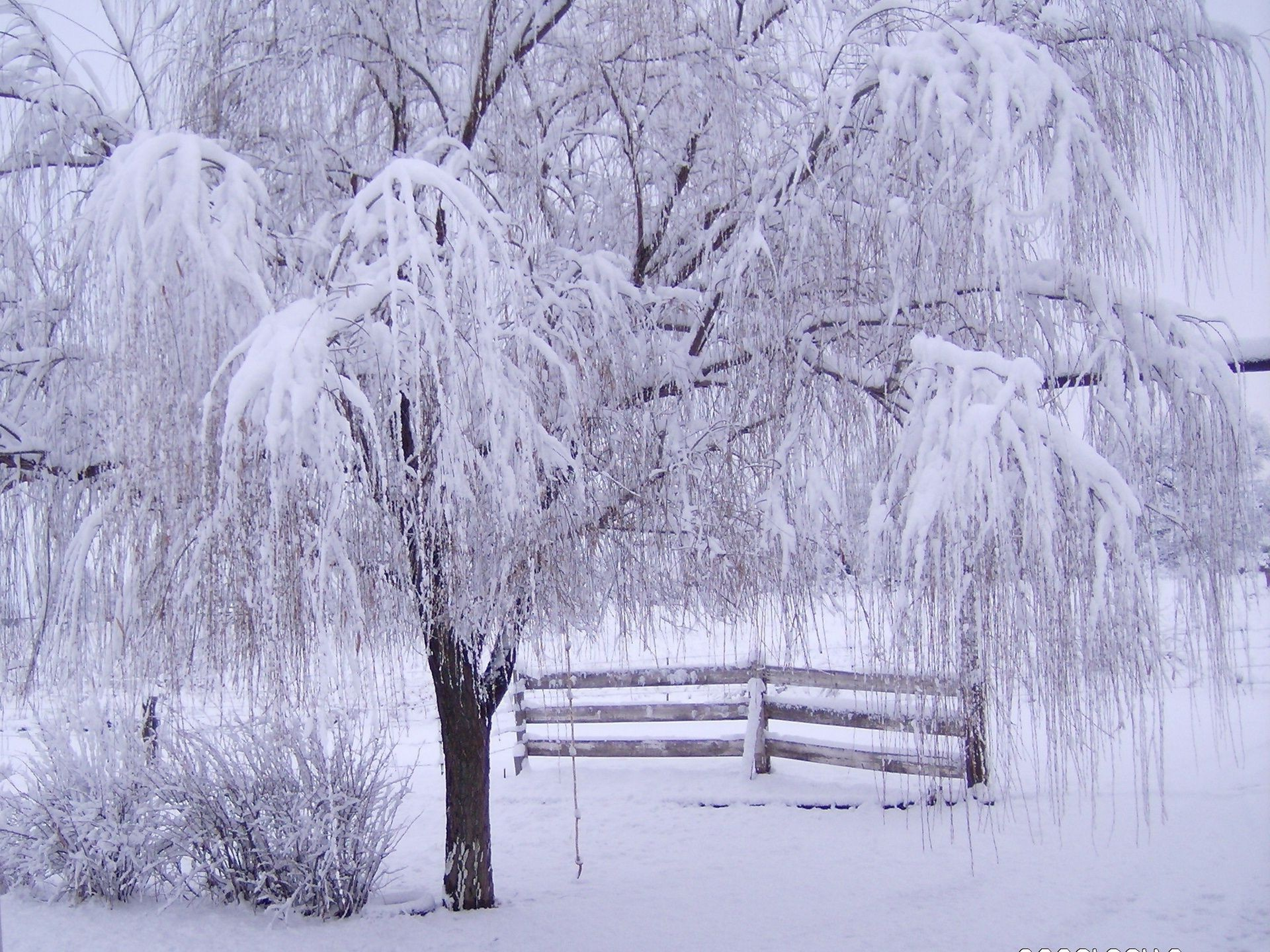 winter snow frost cold frozen wood season ice weather tree landscape snow-white frosty snowy icy snowstorm scenic scene branch