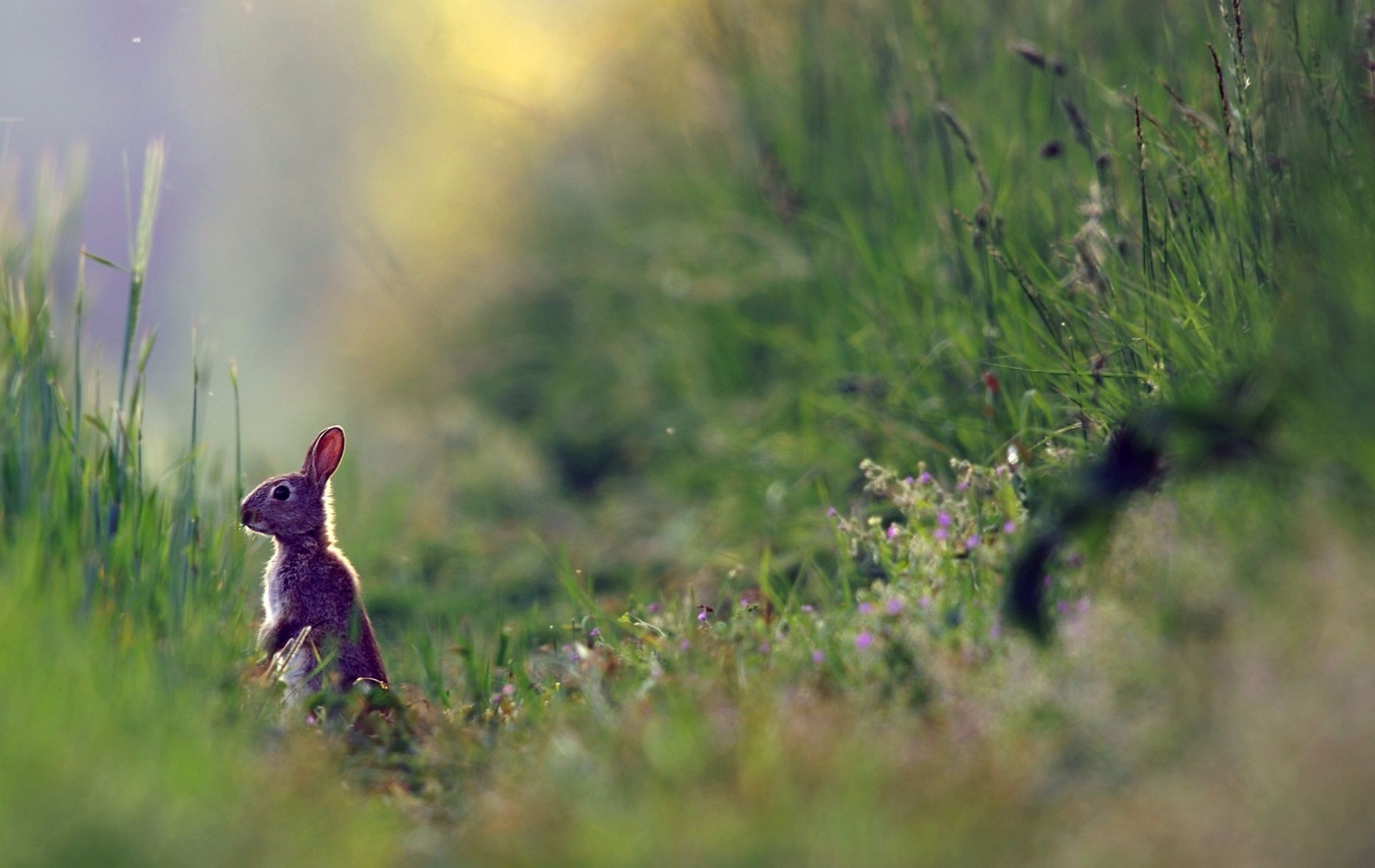 Nature summer grass plants rabbit