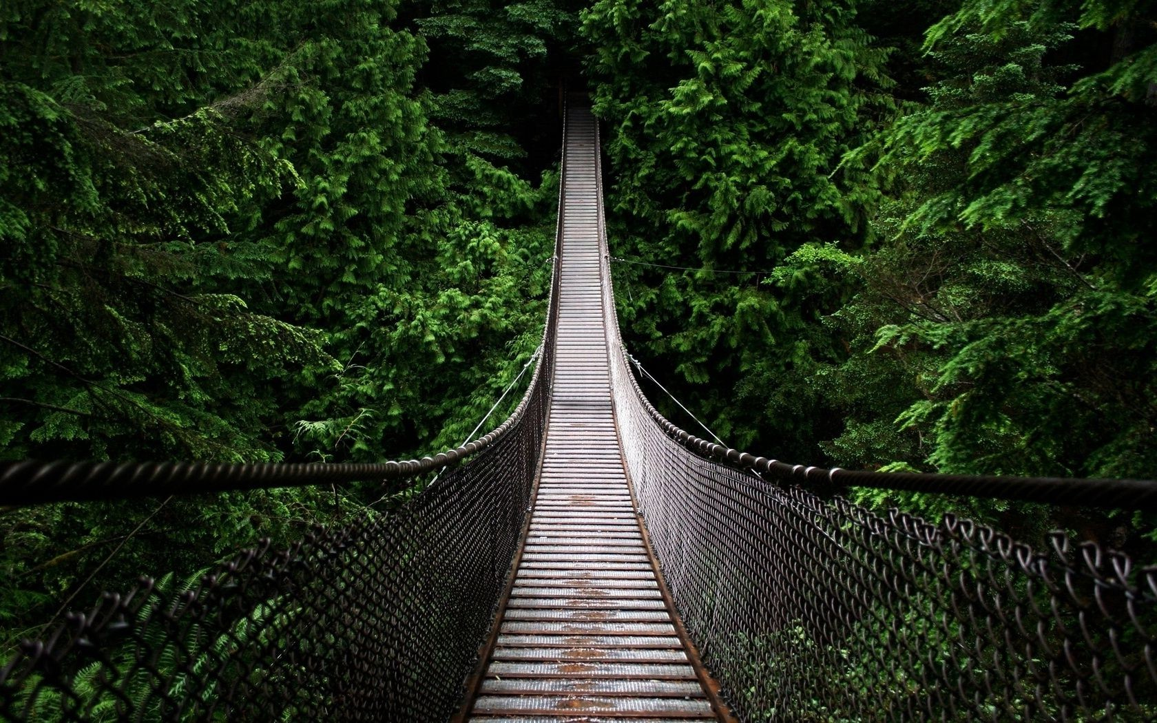 forest hanging bridge green nature