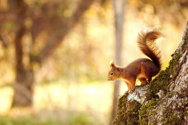 squirrel tree Squirrel bokeh nature forest forest light t
