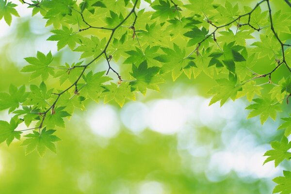 Branch With Green Leaves 25
