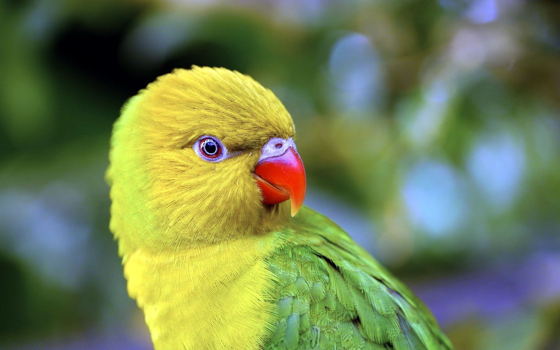 animals bird parrot nature wildlife animal outdoors beak parakeet feather tropical little color wild bright macaw